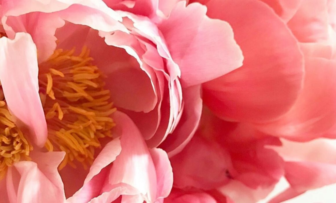 Peony, a herb often used to help balance hormones